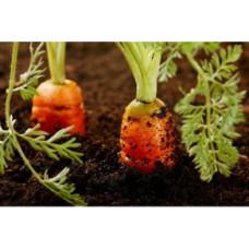 Veg Grow Topsoil