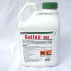 Gallup 360